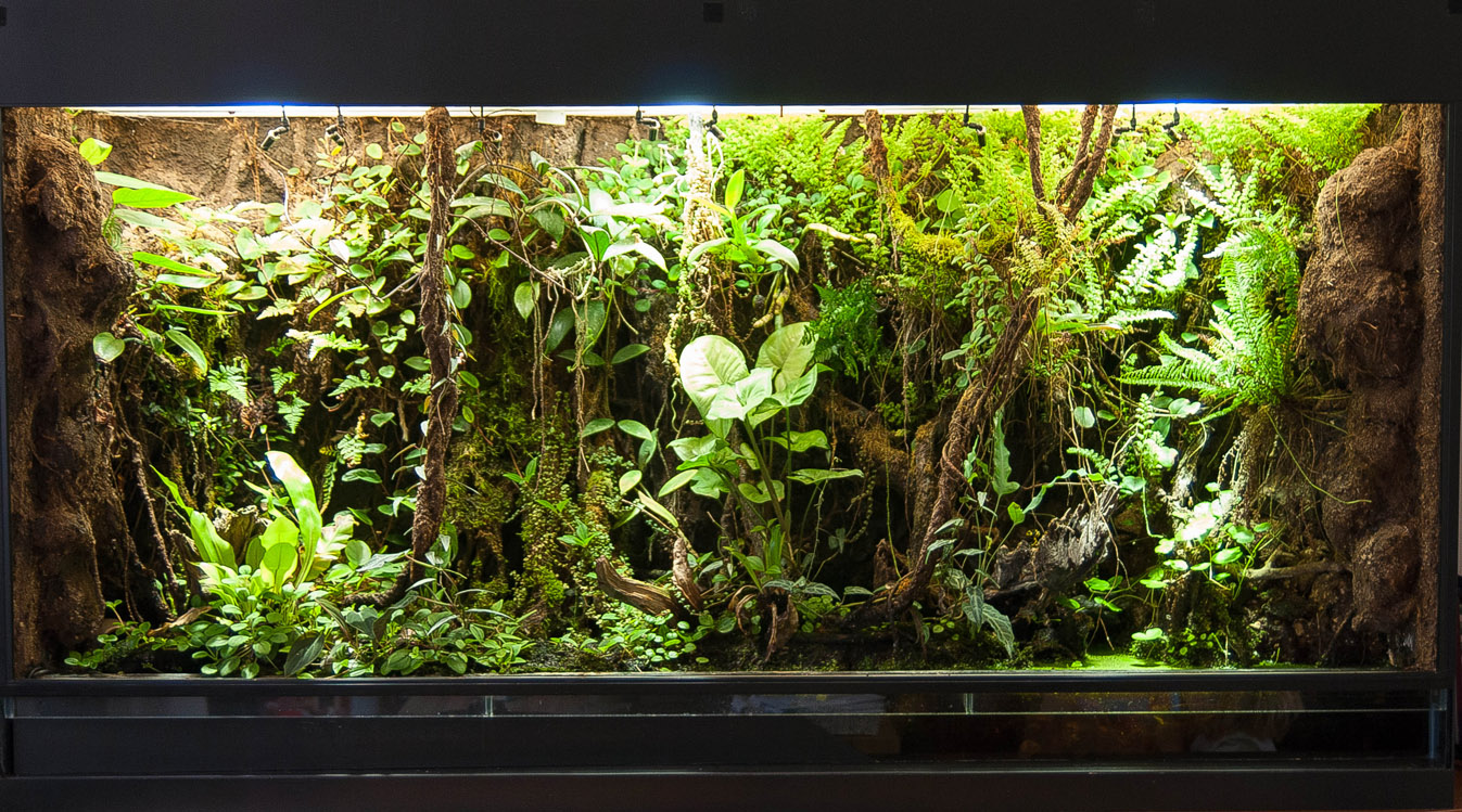 10 Gallon Dart Frog Vivarium | www.imgkid.com - The Image ... 10 Gallon Vivarium